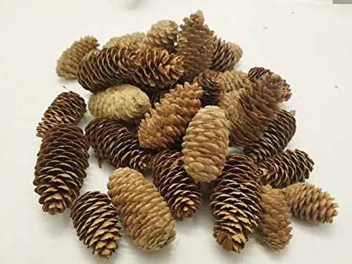 BCD XL Bag Medium Pinecones - Bag of 20-30 Medium Pinecones, Perfect for Crafting, Decorating Bowl Fillers