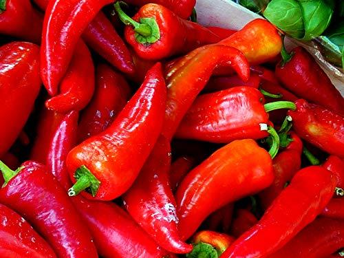 Spitzpaprika rot im 400 g Packung