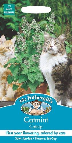 Mr Fothergills - Nepeta