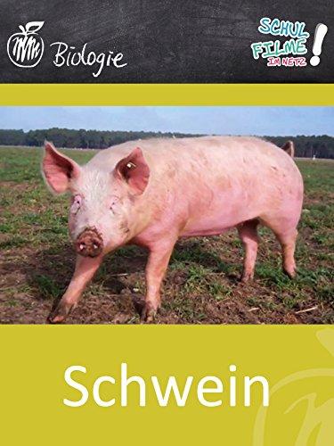 Schwein - Schulfilm Biologie