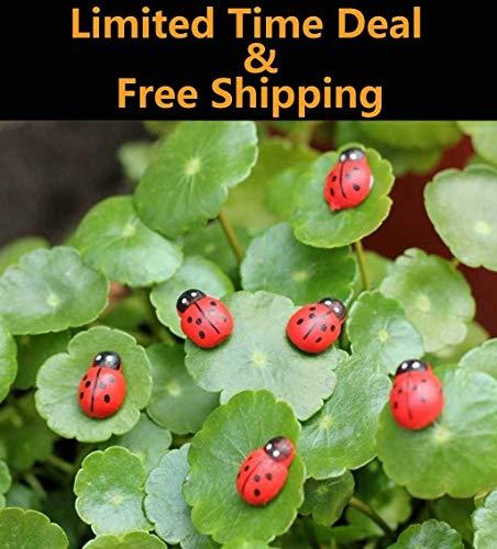 Riforla ⭐⭐⭐⭐⭐ 10pcs Mini Wood Ladybug Miniature House Fairy Garden Micro Landscape Home Garden Decoration Plant Pots Bonsai Craft Decor