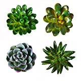 CoCoMe Funny 3D Resin Succulent Fridge Refrigerator Magnets, Set of 4