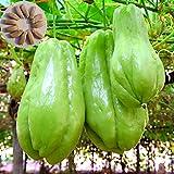 Semillas de árbol frutal vegetal, 20 unidades, bolsa de semillas de chayote Sunshine Need Nutritious Vitamina Incluida Natural Chayote Semillas para Jardín - Chayote Seeds