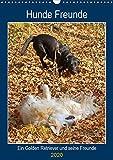 Hunde Freunde (Wandkalender 2020 DIN A3 hoch): Ein Golden Retriever und seine Hundefreunde (Planer, 14 Seiten ) (CALVENDO Tiere)