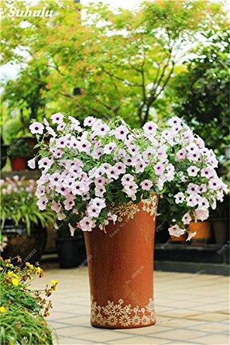50 Pcs Pétunia Graines de fleurs pétunias Jardin Bonsai Balcon Petunia hybrida Flower Seed Plantes décoratives pour jardin 8