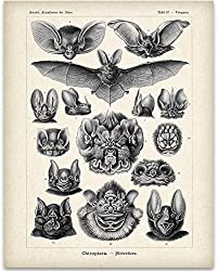 Image: Ernst Haeckel Bats Illustration | 11x14 Unframed Art Print | Great Biology Lab Decor or Gift Under $15 for People Who are Fascinated with Bats | by Personalized Signs by Lone Star Art