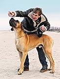 flexi Roll-Leine Giant Professional Gurt 10m schwarz für Hunde bis max. 50 kg - 2