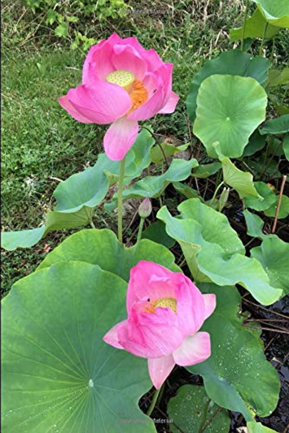 オーラルスコットランド人アルファベット順Perpetual Gardening Diary: 366 pages with dates, journal, planner, scheduler, organizer for a continuous yearly record of your garden