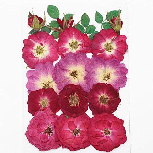 ZYC-WF TrockenblumenpräGung DIY Wald SchöNheit Make-Up Rose Rose Gemischte Modelle Gepresste Blume Lesezeichen Fotorahmen Blumenpapier Echte Blume Materialpaket Versuchen Sie, Baste
