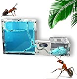 WSZYBAY Ant Nest Ant Castle Ant Farm Habitat With Coconut Tree Ant Workshop For Kids And Adults Live Ants Not Included Watch Ants Dig Their Own Ant House Tunnels