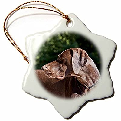 Ornaments to Paint Danita Delimont - Dogs - A German Shorthaired Pointer dog - NA ZMU3 - Zandria Muench Beraldo -