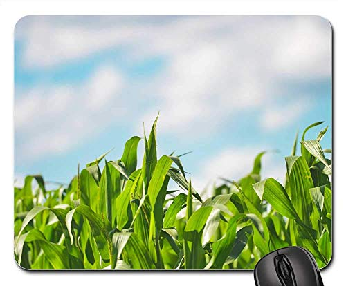Mauspad - Pflanzen Pflanzen Mais Mais Young Fresh Green Lush
