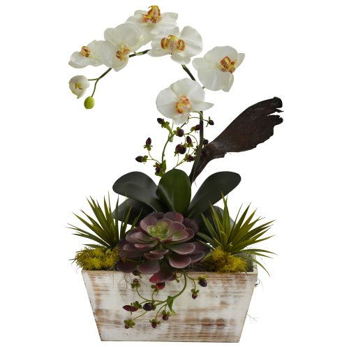 Top orchids plant for delivery prime for 2020