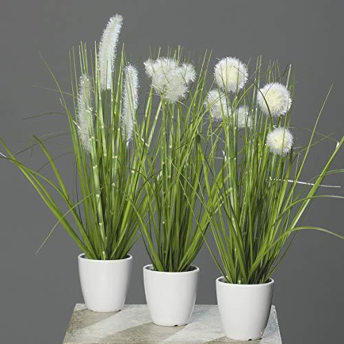 A&M Handel GmbH -  mucplants