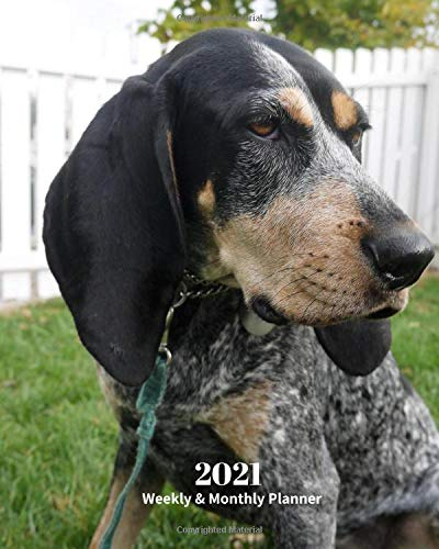 2021 Weekly and Monthly Planner: Bluetick Coonhound Dog - Monthly Calendar with U.S./UK/ Canadian/Christian/Jewish/Muslim Holidays– Calendar in ... in.- Dog Breed Pets For Work Business School