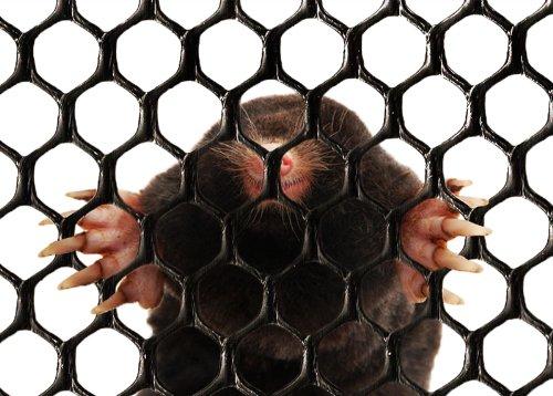 Mole Mesh 1.5 m x 50 m Mole Locking Mole Anti Mole Control
