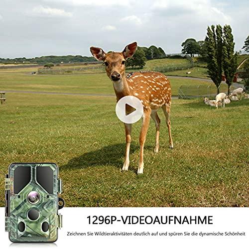 Campark Wildkamera T85 Erfahrungen & Preisvergleich