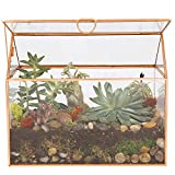 Deco Glass Terrarium, Succulent, Air Plant (Large 9.8' x 6' x 8')
