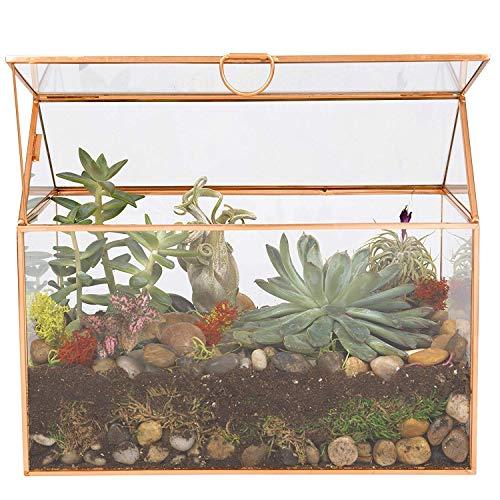 Deco Glass Terrarium, Succulent, Air Plant (Large 9.8 x 6 x 8)