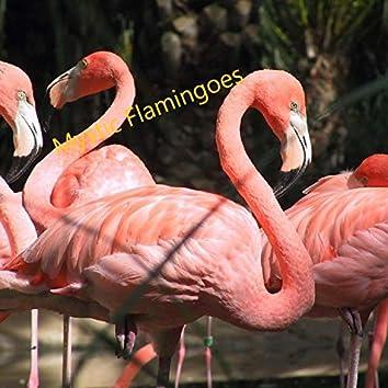Mystic Flamingoes