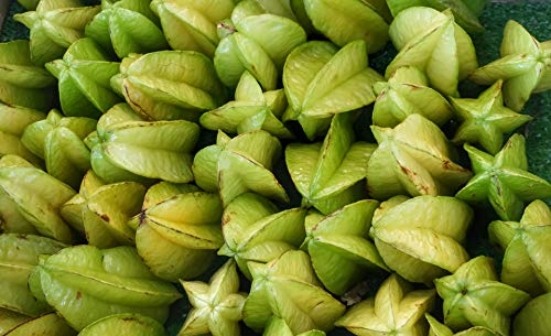 Kejora Fresh Star Fruits - 6 counts
