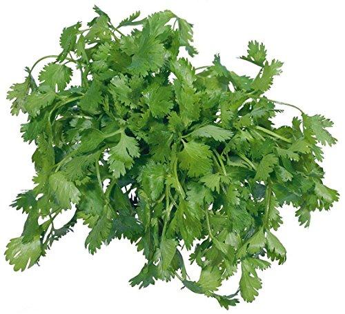Futaba Coriandre chinois persil Coriandre pur légumes bio naturel 200 graines
