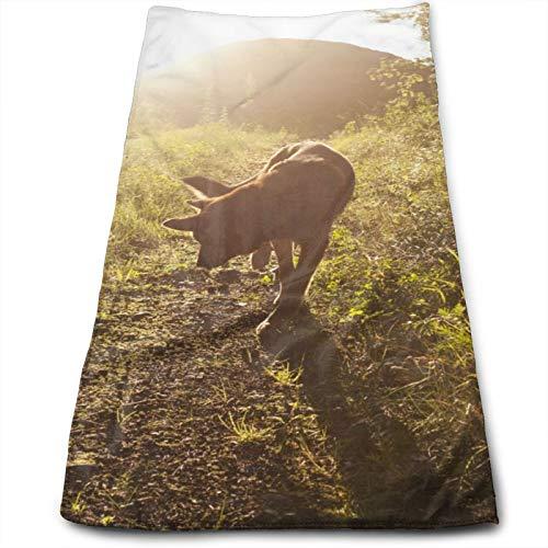 Wolf Viene con Toalla Secamanos Ligera, Toalla De Viaje, Toalla De Baño, Toallitas Altamente Absorbentes Toallas Multifunción 70x30 cm