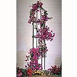 Rankhilfe Rosenbogen Obelisk Rosensäule Garten Deko für Rankpflanzen Rosengewächse Maß: 190cm / 160cm x 40cm Farbe dunkelgrün oliv Rankgitter iapyx®