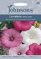 【輸入種子】 Johnsons Seeds Lavatera PASTEL MIXED ラヴァテラ・パステル・ミックス ジョンソンズシード