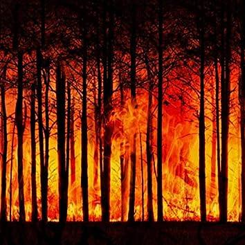 Arde Pădurea (feat. Frate Gheorghe)