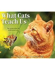 What Cats Teach Us 2021 Calendar