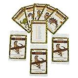 Dinosaur Trading Cards for Boys Adults Girls Bundle Series 2 Multi Pack Clade-Gravim Three 5 Packs