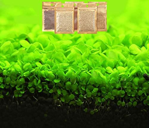 Bacopa Monnieri Seeds 10g Bio-Aquariumdekorationen Hydroponic Growing Plant Seeds Blume zum Pflanzen von Hone Garden Outdoor (größer)