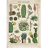 Qqwer サボテン&多肉植物キッチン-ヴィンテージアートプリントポスターキャンバス絵画壁アート写真キャンバスに印刷ポスターとプリント家の装飾-50X70Cmx1Pcs-フレームなし