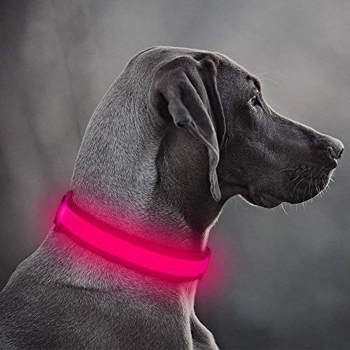 Clan-x LED Dog Collar, USB Rechargeable Adjustable Mesh Webbing Flashing Light Up Collar for Small, Medium, Large Dogs(M, Pink)