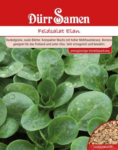 Dürr Samen 4108 Feldsalat Elan Großpackung 250 g (Feldsalatsamen)