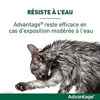 ADVANTAGE Chat – Anti-Puces pour Chats – Moins de 4KG - 4 Pipettes