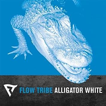 Alligator White