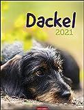 Dackel Kalender 2021