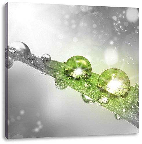 Water druppels op een sprietje grasCanvas Foto Plein | Maat: 40x40 cm | Wanddecoraties | Kunstdruk | Volledig gemonteerd