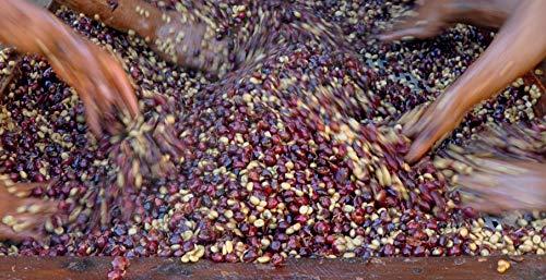 Cup of Excellence© Winner Coffee El Salvador 90+ (1)