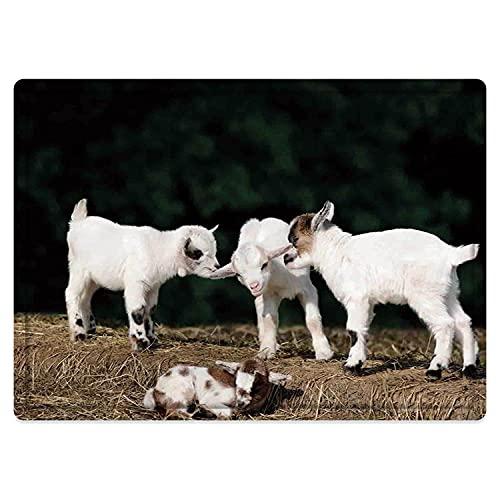 Alfombra de baño Antideslizante 50X80cm,Animal, Lindo Adorable bebé Hermano Cabras Jugando Entre sí en una Roca sólida en una Granja, blaAlfombrilla Lavable a máquina con absorción de Agua Blanda
