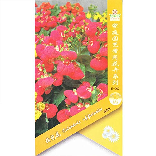 GEOPONICS SEEDS: Calceolaria (Mixed) * 1 Packet 10 & # 39; s (Pcs) * Slipper Blume, Taschenbuch Pflanze, Pouch Blume, Pantoffel: 1 Packet