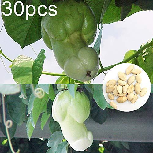 ZqiroLt 30 Stück Penis Melone Kürbiskerne Garten Hof Bonsai Köstliche Gemüsepflanzen Einfach Zu Pflanzen, Köstliche, Nahrhafte Gemüsesamen Kürbiskerne 30 Stück