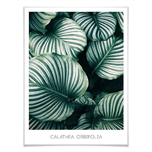 Poster Calathea Orbifolia plant kamerplant tropisch jungle groene bladeren zonder accessoires Wall-Art 80x100 cm groen