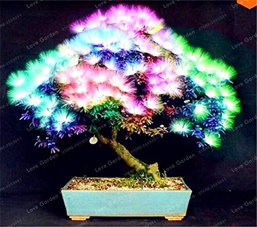 Generic Fresh 20pcs Albizia Flower SEEDS zum Pflanzen von Mischfarben