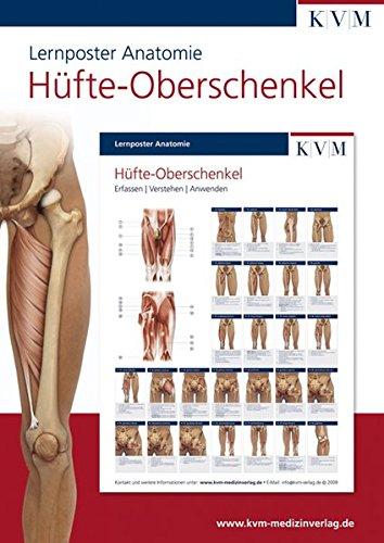 Lernposter Anatomie: Region Hüfte - Oberschenkel (Die Muskelbuch-Reihe)