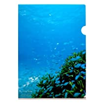 北島清隆 沖縄クリアファイル単品(コーラルシー) A4サイズ