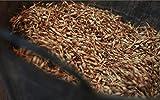 FERRY Bio-Saatgut Nicht nur Pflanzen: 200 Pos Verde Samen Kaufen Sie direkt vom Grower in AZ