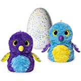 Hatchimals Glittering Garden - Hatching Egg and Interactive Shimmering Draggle by Spin Master [並行輸入品]
